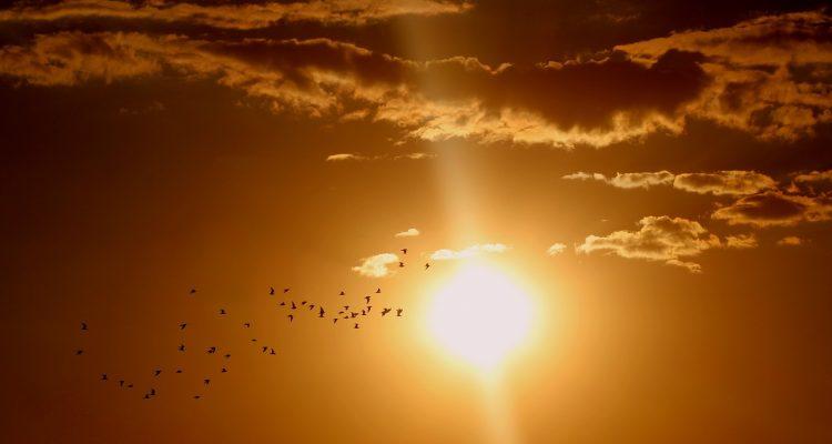 influencia-sol-signos-zodiaco