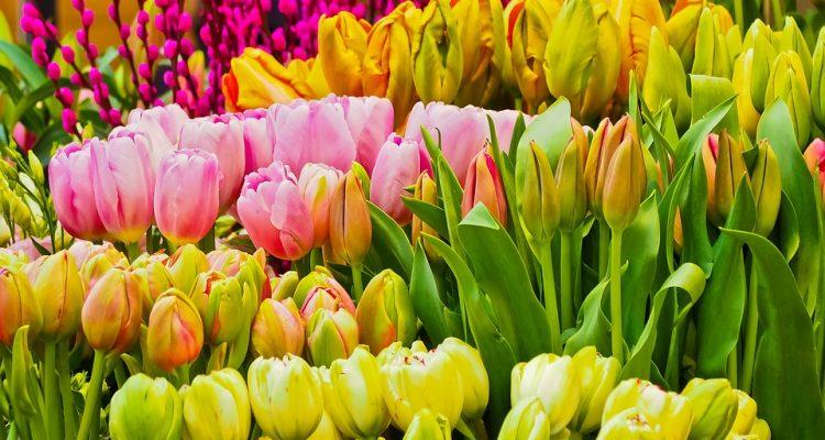 flores para cada signo del zodíaco