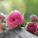 ¿Qué significa soñar con flores?